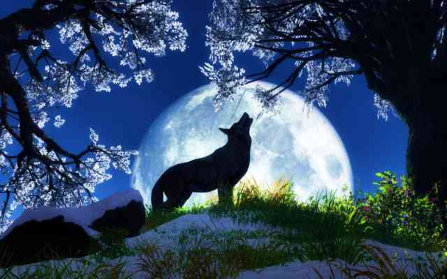Moon wolf Desktop Free  Wallpapers: Animal Wallpapers