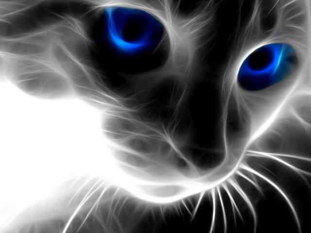 Animal wallpapers, HD 3D cat