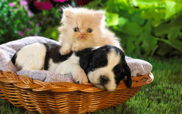 Animal wallpapers, little cat and dog