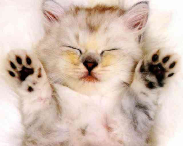 Animal wallpapers,Very cute baby kitten