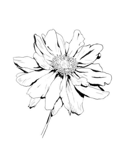 Flower Drawings | Flowers wallpapers | #11