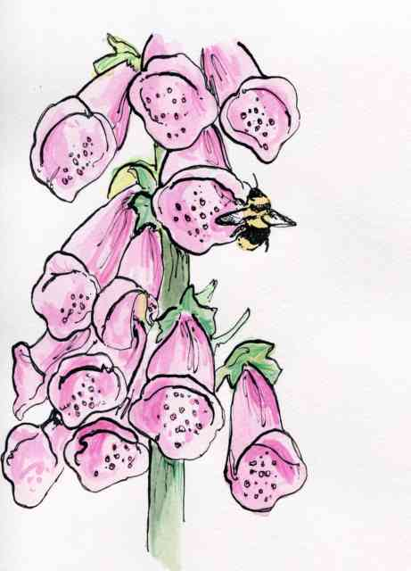 Flower Drawings | Flowers wallpapers | #12