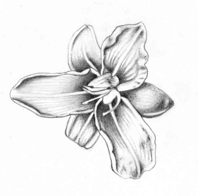 Flower Drawings | Flowers wallpapers | #16