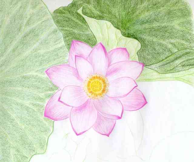 Flower Drawings | Flowers wallpapers | #21