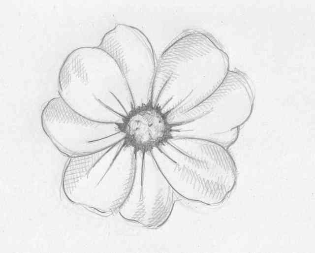 Flower Drawings | Flowers wallpapers | #22