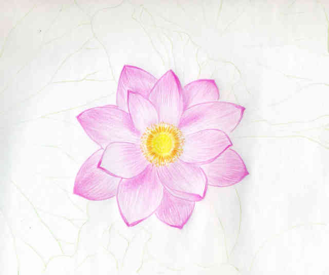 Flower Drawings | Flowers wallpapers | #24