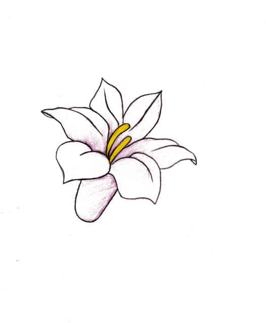 Flower Drawings | Flowers wallpapers | #3