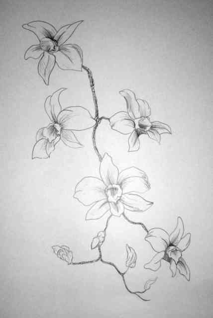 Flower Drawings | Flowers wallpapers | #4