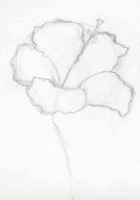 Flower Drawings | Flowers wallpapers | #9