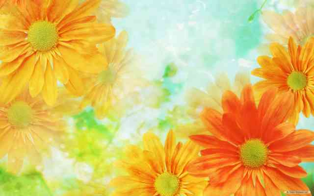 Flowers background | Flower wallpaper | images of flower | #2