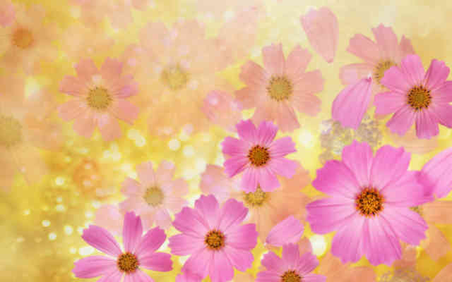 Flowers background | Flower wallpaper | images of flower | #20