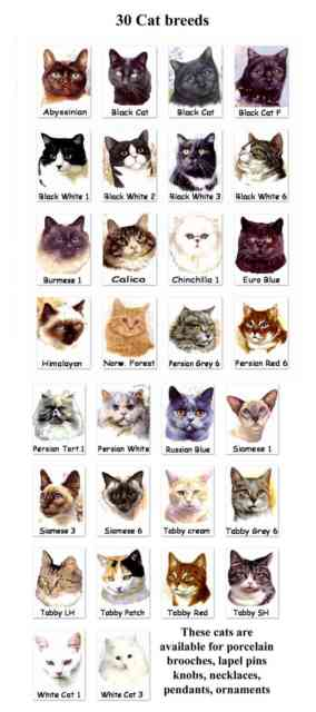 Breeds of Cats | Types of cats | Cats Wallpapers | #10