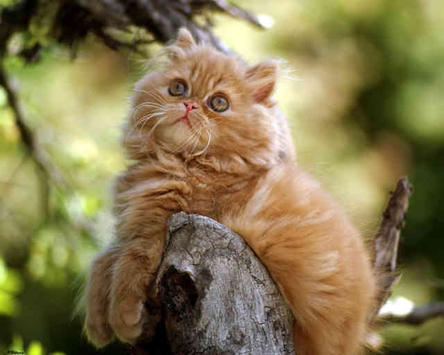 Breeds of Cats | Types of cats | Cats Wallpapers | #15