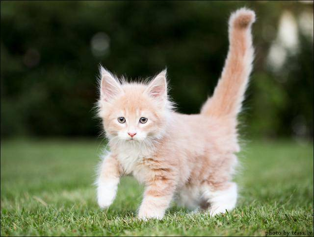 Breeds of Cats | Types of cats | Cats Wallpapers | #17