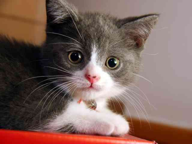 Breeds of Cats | Types of cats | Cats Wallpapers | #22