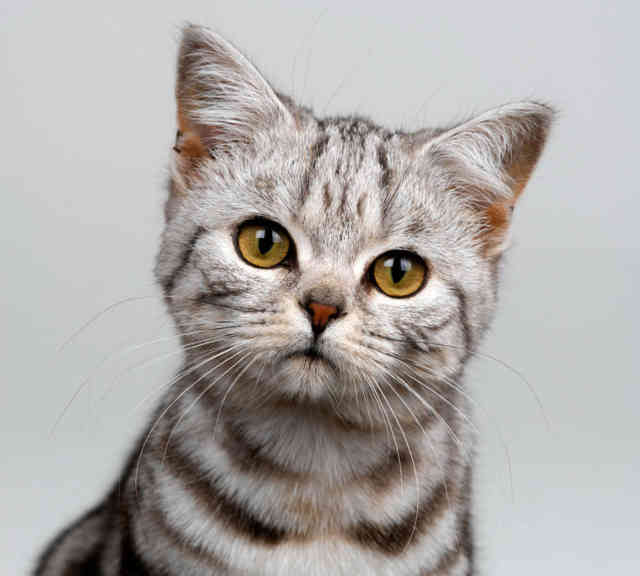 Breeds of Cats | Types of cats | Cats Wallpapers | #4
