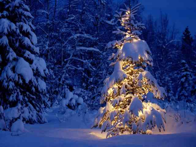 Christmas Tree Wallpaper | FREE Christmas Tree Wallpaper | Christmas Wallpapers | #12
