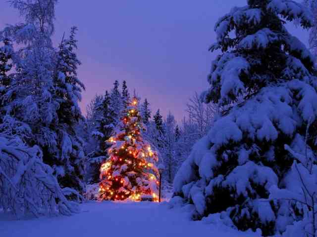 Christmas Tree Wallpaper | FREE Christmas Tree Wallpaper | Christmas Wallpapers | #2