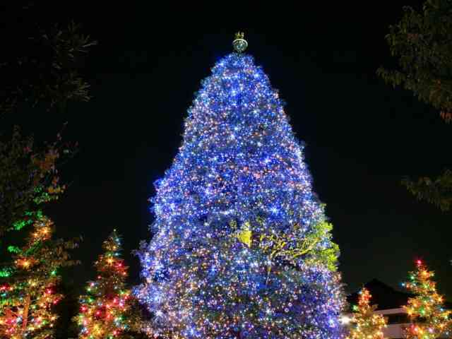 Christmas Tree Wallpaper | FREE Christmas Tree Wallpaper | Christmas Wallpapers | #5