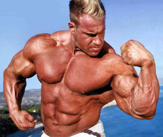 Muscle Misc Bodybuilding