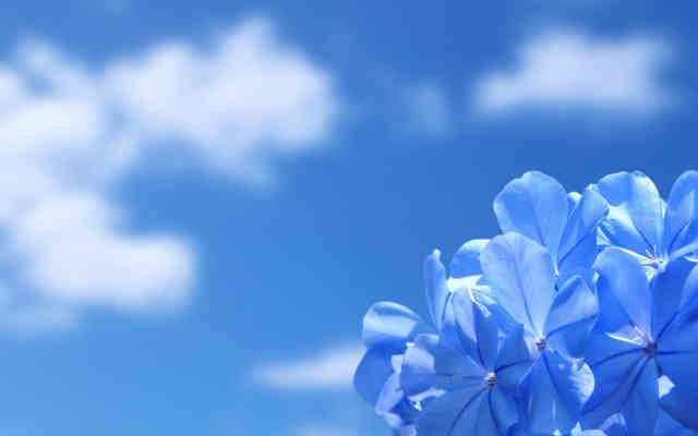 Flower in the Sky Wallpapers