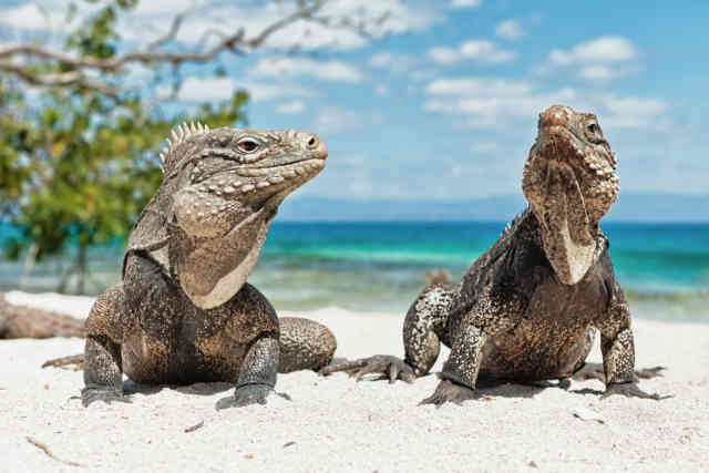 Iguana Beach HD Wallpapers