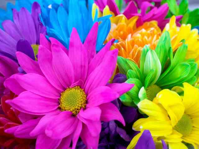 Colorful Flowers #1