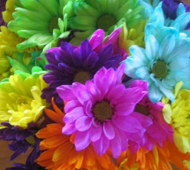 Colorful Flowers #6