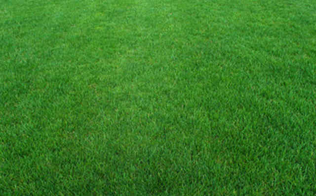 Lawn Great Green Color
