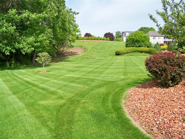 Lawn Like Golf Ground