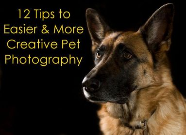 Easy Tips For Amazing Pet Photography