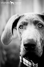 Frame Your Pet With The Assistance of New York Pet Photographer