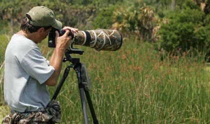 Hire A Wildlife Photographer to Relive What You Want