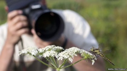 Top Tips for Cracking Wildlife Photography with Your DSLR Cameras!